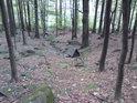 Jak vidno, studánkou začíná potůček, dlouhý jen několik desítek metrů.