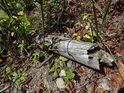 Dnes již stěží posoudíme, zda se jedná o odhozený starý kůl, nebo přirozený uschlý odlomek větve.