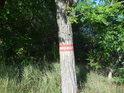 Vnější značka chráněného území na středním akátu.