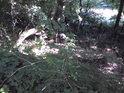 Křivého dříví v lese je nejvíce, tak praví přísloví.