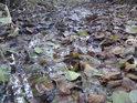 Je to tu mokřadní systém, bukové listí s pomalu utápí.