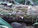 Ve vlhkém prostředí tu rozklad dřeva za plného přístupu vzduchu probíhá poměrně rychle.