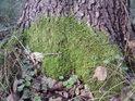 Útok na strom odspodu.