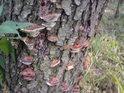 Rostlinný útok na strom.