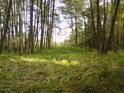 Lesní tráva ve slunečním svitu.