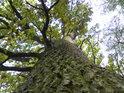 Dub středního věku nahoře na mokřadem na západní straně.
