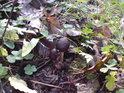 Mykologický ostrůvek.