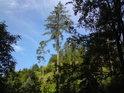 Na Modřínovém vrch rostou také modříny, podle kterých zajisté dostal název.