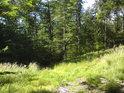 Nenápadná lesní cesta na mýtině.