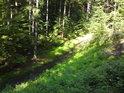 Nádherná lesní pěšina podél Raškovského potoka.