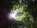Slunce proniká přes lužní listí.