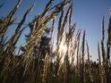 O romantické sluneční záběry tu nouze není, tentokráte za pomoci vysoké trávy a modřínu.