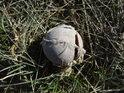 Není nic přirozenějšího, než zpuchřelý tenisák na okraji chráněného území.