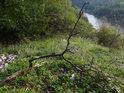 Uschlá větev na skalním ostrohu nad Brněnskou přehradou.