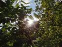 Slunce vykouklo zpoza mraků a prosvítá skrz listy dubů.