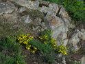 Jaro na skalách je hezky barevné.