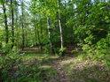 Vidlicovité lesní rozcestí.