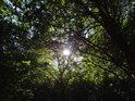 Slunce prosvítá přes větve stromů.