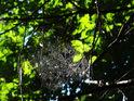 Nádherná pavučina zalitá slunečními paprsky.