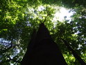 Vzrostlé buky v lese, kam Slunce může spíše jen do horních pater.
