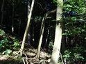 Les slunný a les temný.
