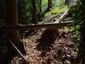 Hůře dostupný lesní svah.
