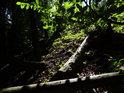 Padlé kmeny holých smrků v lesním svahu.