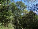 Pěšina vlevo vzhůru do zalesněného svahu a úřední cedule k chráněnému území.