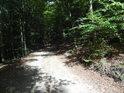 Sluncem osvětlený kus cesty v jinak temném lese.