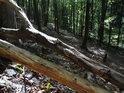 Bukové kmeny nad sebe padlé, již suché.