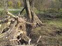 Náplav řeky a odhalené vrbové kořání napovídá, jak tu bývá živo při velkých vodách.