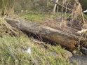 Takové stromy tu nerostou, ale řeka přinese mnoho různého.