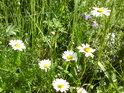Louka plná květů patří k pěknému létu.