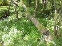 Stromy tu tvoří často přirozené mosty přes vodní tok.
