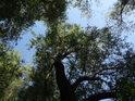 Lužní Slunce se přes vrbové listy dostává na zem poněkud oslabené.