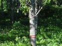Lužní les v horní části chráněného území.