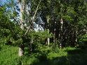 V Nosislavské zátočině je nejvíce vrb, topolů, a akátů.