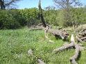 Vítr řádně porovnal dřevo, které nejspíše bude ponecháno svému osudu, pozvolna obroste a zetlí.
