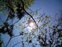 Slunce krásně svítí, jen přímo se do něj dívat prostě není možné.