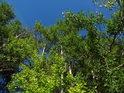 Více barev zeleně oproti modré obloze.