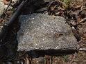 Kamenný úlomek poměrně pravidelného tvaru obklopený loňskými bukvicemi.