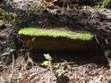 Miniaturní skalní převis.