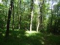 Prosluněný okraj lesa vedle chráněného území Ochozy.