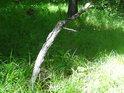Prosluněný klacík na okraji lesa vedle chráněného území Ochozy.