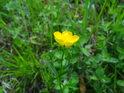 Kouzelná květena Ochozů.