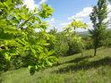Svah na Ochozech zpoza dubového listí.