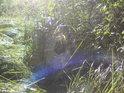 Babí léto s kouzlem pavučin ve zvláštních světelných podmínkách.
