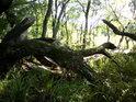 Velice zajímavé scenérie najdeme na kraji lesa.