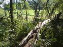 Tlející stromy patří k přirozenostem.