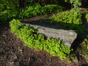 Borůvčí se lépe daří na slunečné straně kamene.
